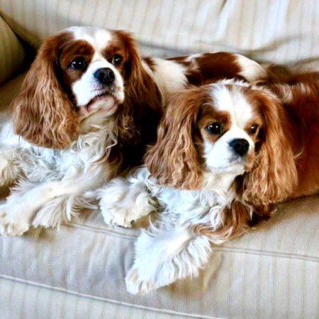 Tom Sawyer & Huck Finn - JT's Dogs